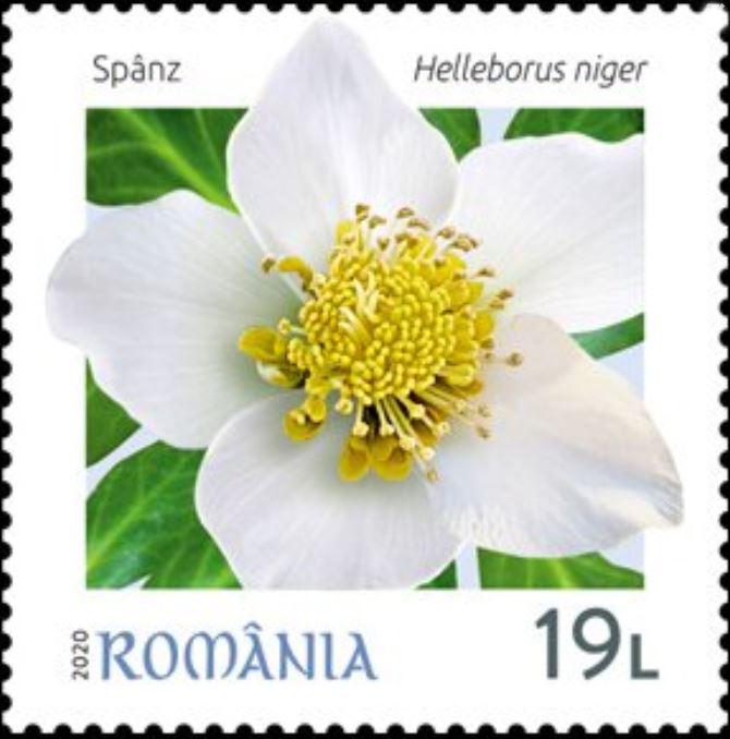Christrose auf Briefmarke - Rumänien