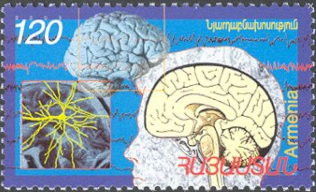 Gehirn und Nervenzellen