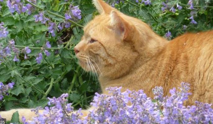 Cat with catnip