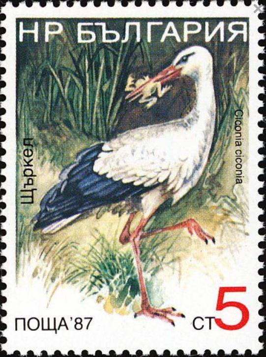 Bulgarien Storch