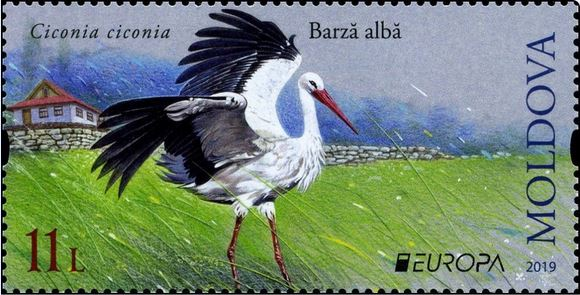 stork on a meadow