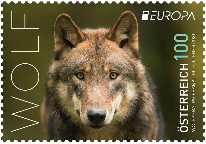 Austrian Wolf